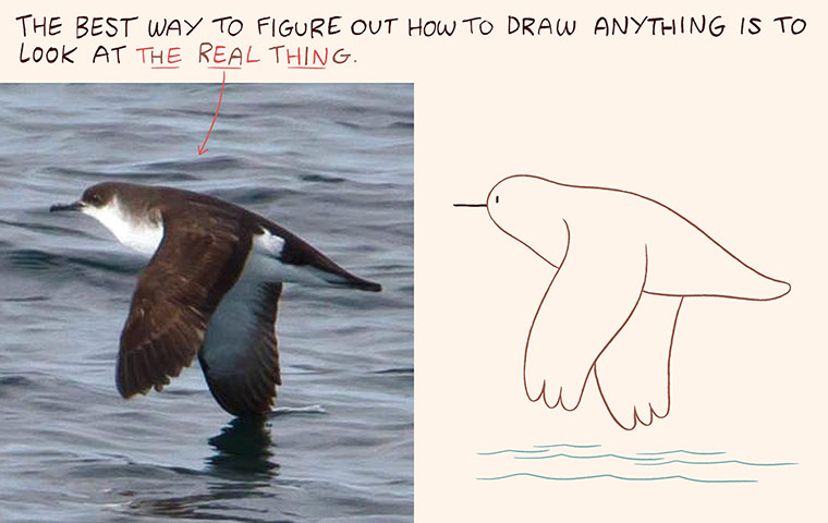 Luke Pearson's How to Draw... birds 9